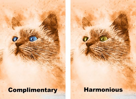 monochrome cat paintings with eyes in complimentary and harmonious colors