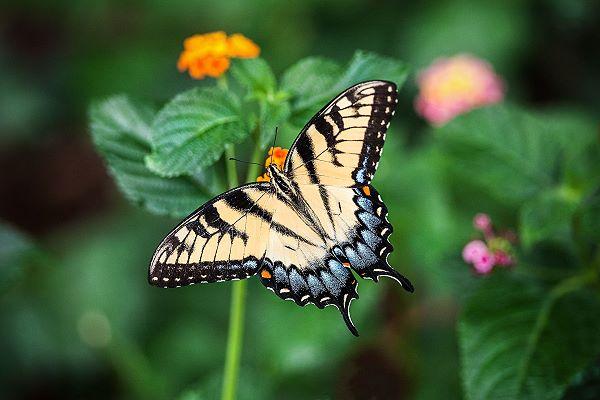 Markings on a butterfly wing form a pattern
