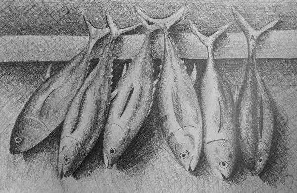 cross hatched fish drawing