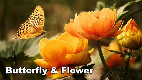 how to paint a butterfly & flower in oil