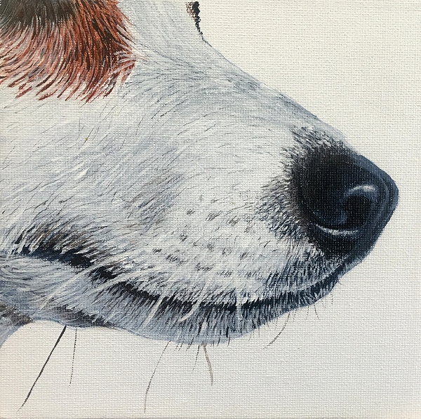 How to paint a realistic Jack Russel Terrier nose - dog painting course
