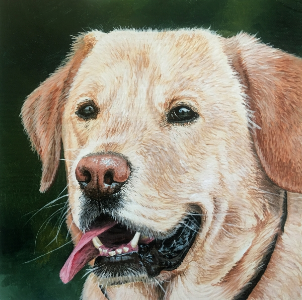 How to paint a realistic Labrador dog painting course